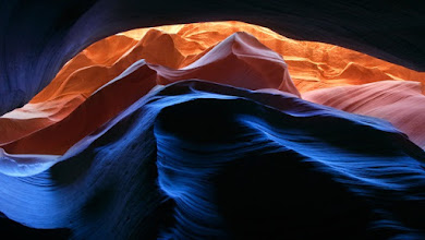 Photo: Canopy of Light by Ian Plant