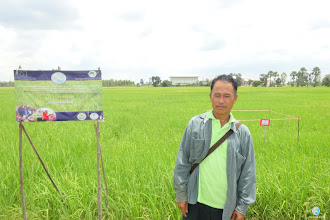 Photo: Mr. Bunphiang Mungdee,  Bokae village, Nanongpai sub district,  Chumphonburi district, Surin province