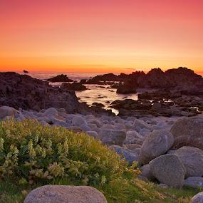 Monterey Sunset by John Crongeyer - Landscapes Waterscapes ( water, nature, sunset, california, landscape, coast )