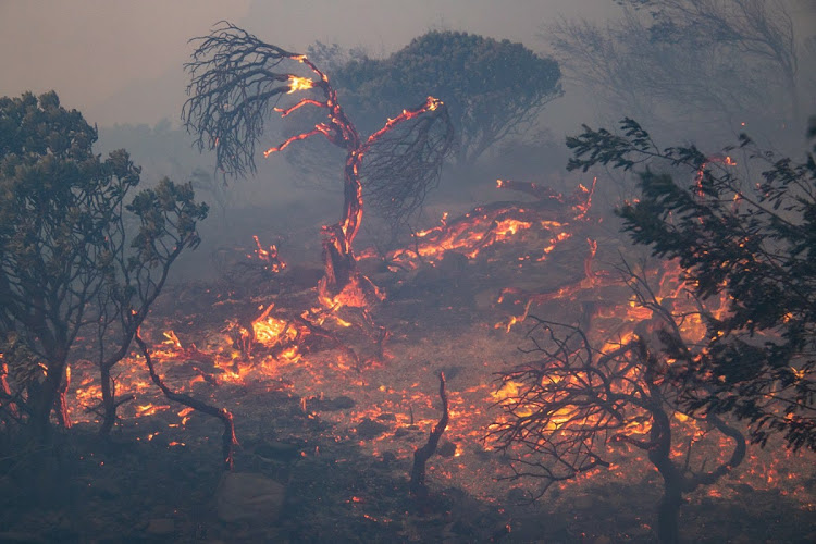 Clearing invasive aliens can save lives and protect the mountain from runaway wildfires