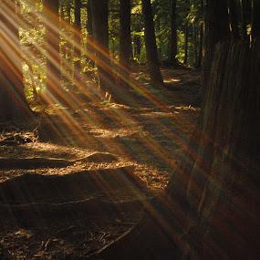 by Molly Nosko - Landscapes Forests