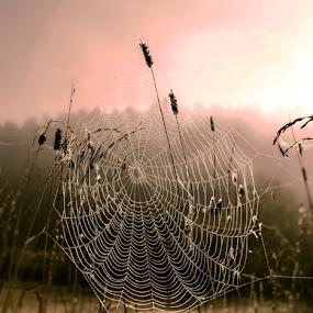 An artist's art by Rose-marie Karlsen - Nature Up Close Webs ( nature, sunset, rain drops, sunrise )