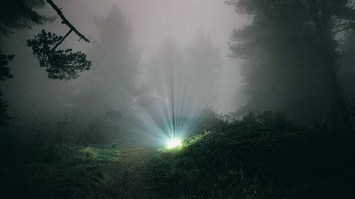 Luz en el bosque indica un tesoro enterrado