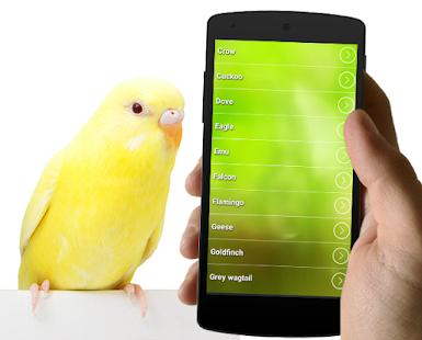 Nejlepší Bird vyzvánění - náhled