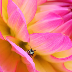 The Lookout by Manuel Balesteri - Animals Insects & Spiders ( antennae, pink, yellow, insect, flower )