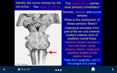 Neuroanatomy - SecondLook- screenshot thumbnail