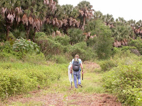 Photo: Surveying along a swath mowed through the resaca of the Sabal Palm Grove
