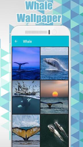 whale wallpaper hd 🐋 screenshot 2