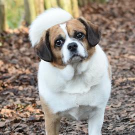 Doggy at Keston Woods by Fiona Etkin - Animals - Dogs Portraits ( canine, loyal companion, nature, pet, dog, woods, animal,  )