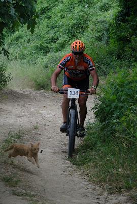 Corri Gattino di maxmax