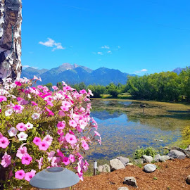 Pretty by Vijay Govender - Flowers Flowers in the Wild ( montana, lakes, water )