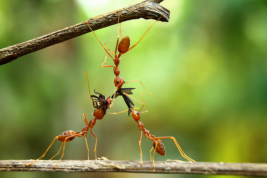 Food chain by Ilham Afandi - Animals Insects & Spiders