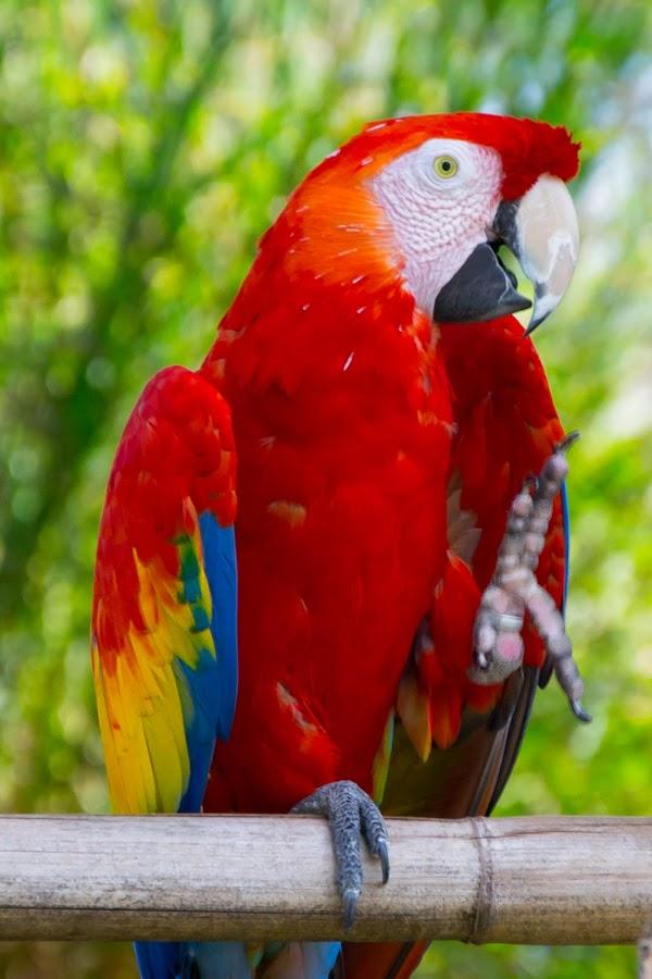 by Tamar Epstein - Animals Birds