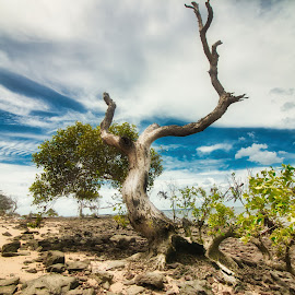 The Praying Tree by Carole Pallier  - Landscapes Beaches ( sand, nature, island, beach, tree, skies, mangrove, landscape )