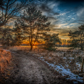 forest path by Egon Zitter - Landscapes Forests ( winter, sunset, snow, forest, lane )