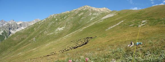 Photo: стада овец в Даутском Заказнике (особо охраняемая территория)