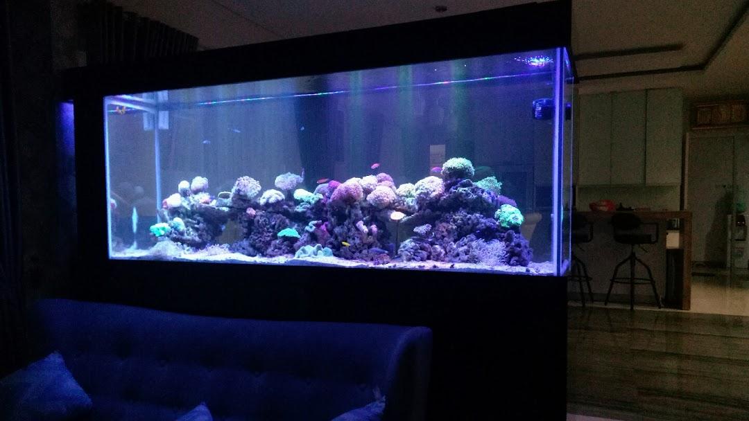 Pipit Mas Aquarium Kedai Aquarium