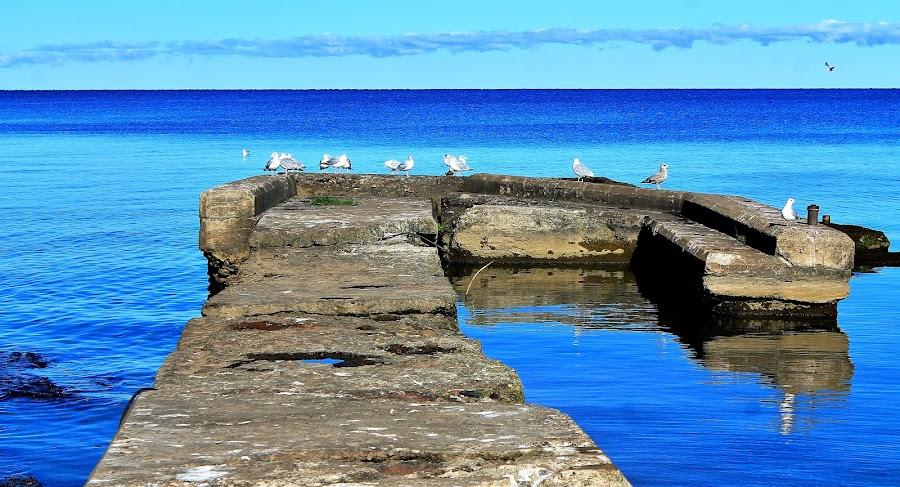 J Dock by Virgil Lohrding - Landscapes Waterscapes
