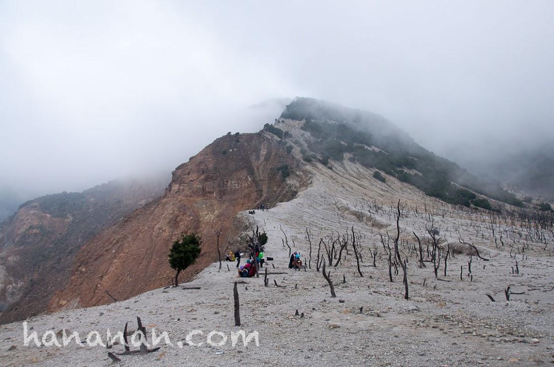 Hutan Mati dengan tebing jurang yang bikin ngeri. Hutan Mati Gunung Papandayan