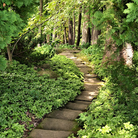 Garden Path in Stan Hywet House and Gardens, Akron, OH by Sheri Fresonke Harper - Landscapes Forests ( ground cover, ohio, stan hywet, path, akron, cedar, forest, house, oj, garden )