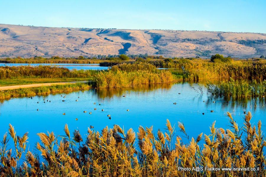 Озеро Агмон Хула. Экскурсия в национальный заповедник перелетных птиц. Израиль.