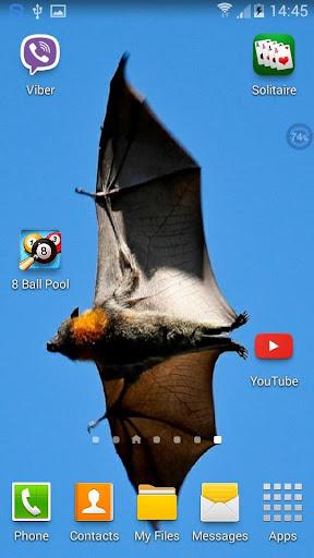 Bats SHAKE And Change LWP