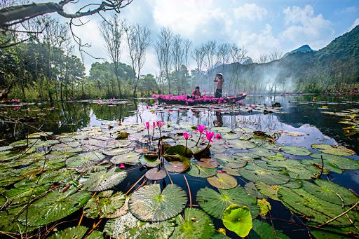 Stream flower 2 | Waterscapes | Landscapes | Pixoto