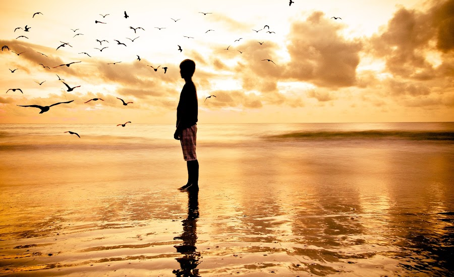 Warm Swarm by Meaghan Browning - Landscapes Beaches ( water, bird, seagull, pwcotherworldly, silhouette, ocean, beach, landscape, birds, boy )