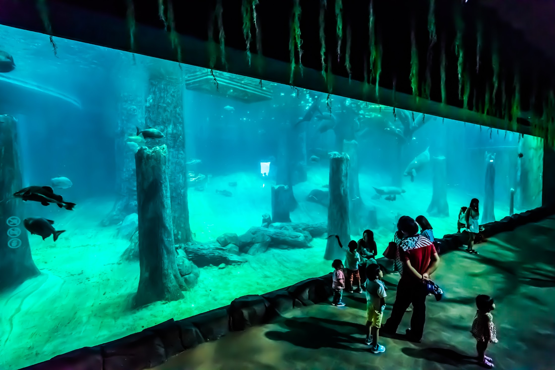 シンガポール リバーサファリ アマゾン浸水林1