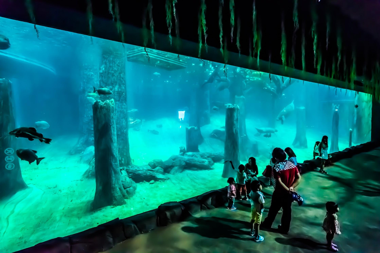 Singapore River Safari Amazon Flooded Forest1