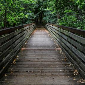 Edwards Gardens Bridge by Ralph Sobanski - Buildings & Architecture Bridges & Suspended Structures ( canada, vanishing point, toronto, forest, lines, bridge, edwards gardens )