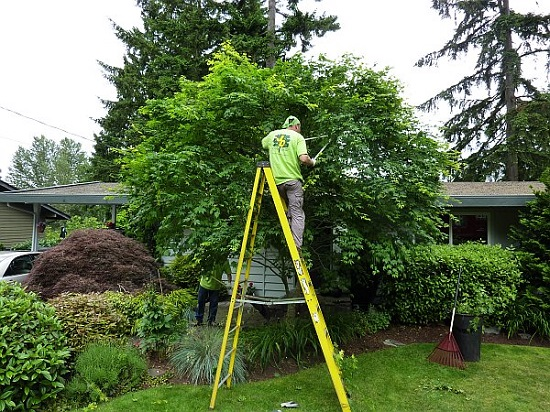 tree-pruning-lg.jpg