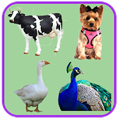 Animal Sounds Quiz