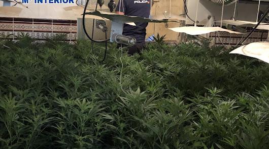Cinco detenidos con más de 2.500 plantas de marihuana en Los Cortijillos