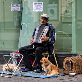 Dream Team by Suzana Svečnjak - People Musicians & Entertainers ( playing, dogs, musician )