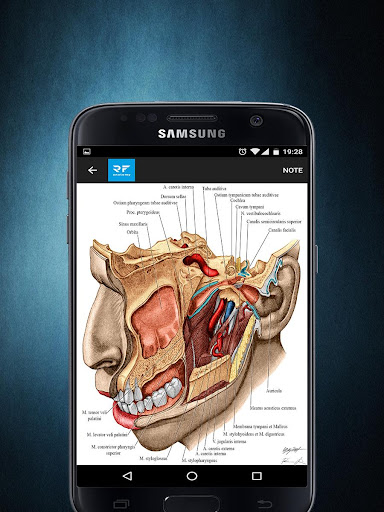 玩免費醫療APP|下載RF Human Anatomy Atlas app不用錢|硬是要APP