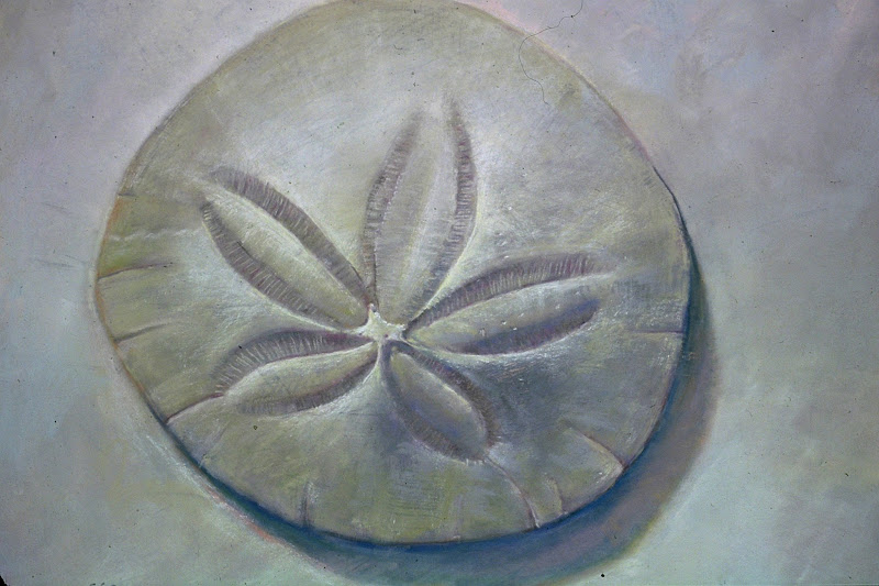 """Photo: Sand Dollar 1993 (c) Np H 20"""" L 23"""" A fine art giclee reproduction is available at http://fineartamerica.com/featured/sand-dollar-nick-payne.html"""