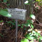 Blackgum (Black Tupelo)