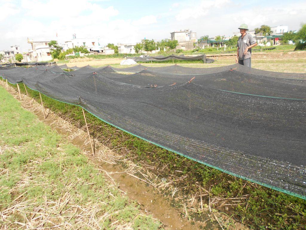 Kết quả hình ảnh cho lưới che nắng cho rau