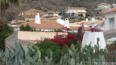 Photo: Kaktusar och Bouganvilla