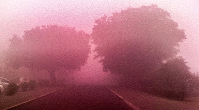 Photo: Foggy Winters (also, the two trees look like a kissing couple!)