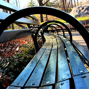 Central Park Benches by Gina Gomez - City,  Street & Park  City Parks ( benches, bench, park bench, pwcbenches, city park bench, central park, city park )