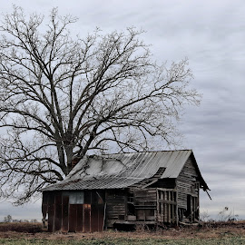 Old House by Mary Zugelder - Buildings & Architecture Decaying & Abandoned ( countryside, winter, abandoned, house, farmland,  )