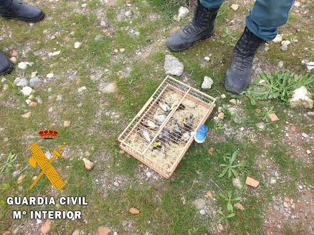En total fueron intervenidas 80 aves en Mojácar y en el Puerto de Almería.