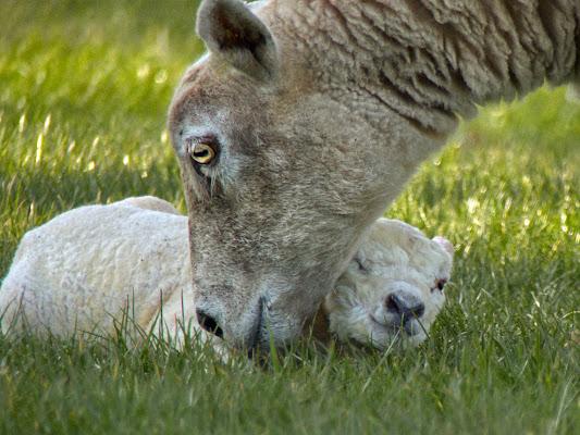 Just born. di silviola