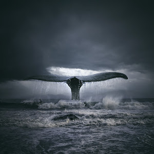 stormy_sc.jpg