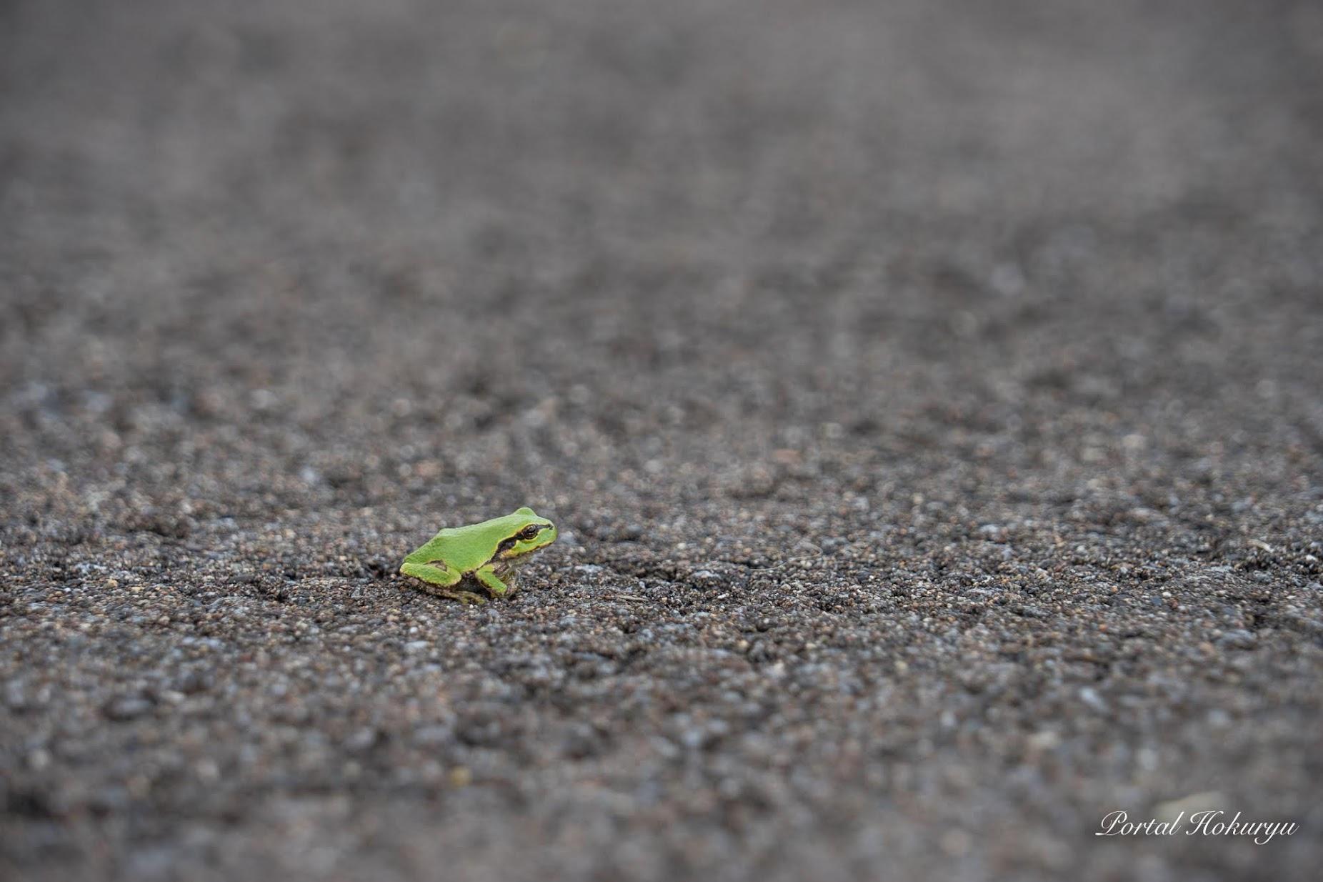 緑の小さなカエルちゃん