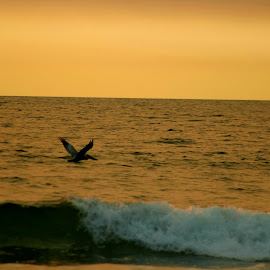 A silhouette of a pelican flying over a crashing wave  by LaDonna McCray - Animals Birds ( waves, ocean, sunset, bird, pelican, silhouette, water )