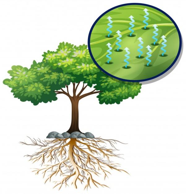 Big green tree and close plant cells Free Vector