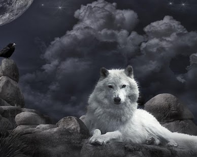 Wolf Live HD Wallpaper - náhled